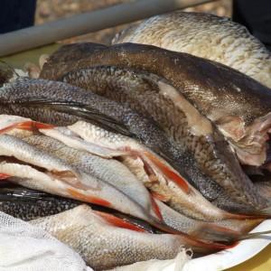Рыбка на любой вкус