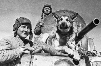 Собаки на боевом посту